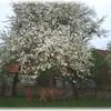 Der Garten im Frühling.
