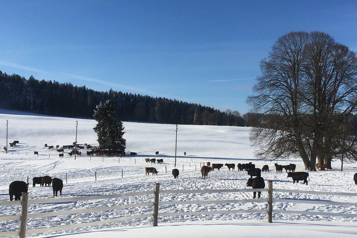 Winter im Pferdeparadies