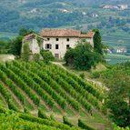Friaul und Venedig Aktivreise, Weingebiet Collio