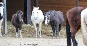 Altersplatz auf der Pferdeweide Villiger