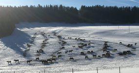 Pferdeweide Villiger im Winter