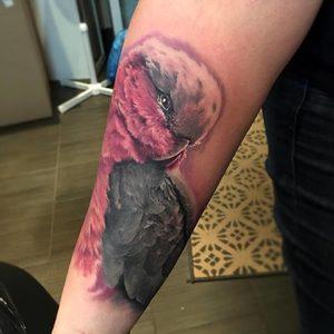 Selfmade Tattoo Berlin Zsofia Belteczky papagai bird nature