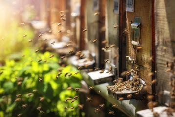 Peters Bienenwelt