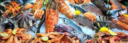 Fisch Zegel